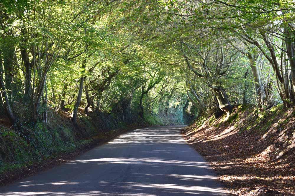 A Typical Weald Lane